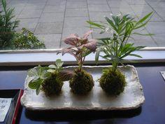 Hoy te propongo aprender paso a paso cómo hacer una kokedama para decorar el interior de tu casa creando jardines flotantes e imprimiendo un estilo natural en el espacio. Todoe ello gracias a la kokedama, una técnica japonesa que permite a la planta vivir en una bola de musgos sin necesi