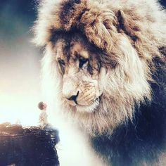Lion of the Tribe of Judah Lion Images, Lion Pictures, Jesus Pictures, Surreal Photos, Surreal Art, Photographs, Lion Of Judah Jesus, Giant Animals, Lion And Lamb