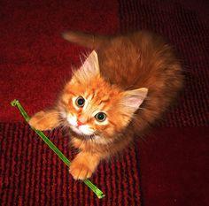 ginger cat, red carpet, green straw