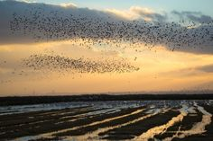 The migration Photo by Daniel Pinheiro — National Geographic Your Shot - Tagus Estuary Natural Reserve in Lisbon - Portugal. Lisbon Portugal, National Geographic Photos, Your Shot, Amazing Photography, Places To Go, Shots, Sunset, Beach, Water