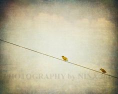 Bird Photography   Birds on a Wire Blue Sky by NinaCollosi on Etsy, $18.50
