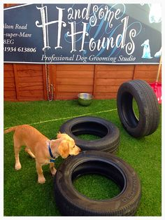 Handsome Hounds  Professional Dog Grooming Studio  258 Milton Road Weston-Super-Mare BS22 8EN www.handsomehoundsweston.co.uk 01934 613806 #DayCare #Dogs #DogLove #fun #tyres