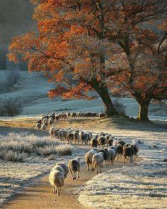 Lake District, Beautiful World, Animals Beautiful, Stunningly Beautiful, Cosy Night In, Foto Poster, Autumn Scenes, Belle Photo, Beautiful Landscapes