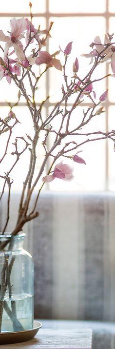 Tulip Magnolia Branches | Spring Decorating