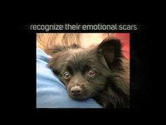 A Rescuer's Creed - National Mill Dog Rescue - YouTube