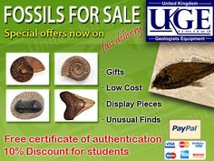 Fossils for Sale Free Certificates, Student Numbers, Bunny Drawing, Website Security, Student Information, Fossils, Art Photography, Rabbit Drawing, Student Info