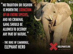 We have to save the african elephants and rhinoceros before it's too late... Let's raise awareness !
