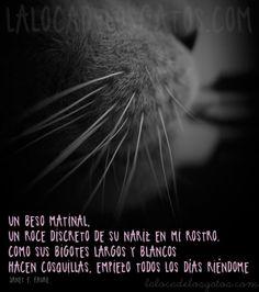 cita-gatos-bigotes                                                                                                                                                                                 Más
