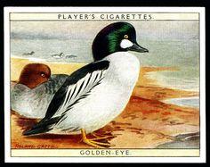 Players, Game Birds & Wild Fowl 1928. No4 Golden-Eye