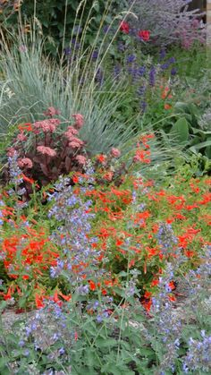 Blue oat grass, Salvia 'May Night', Nepeta 'Walker's Low', Zauschneria 'Orange Carpet', Sedum 'Purple Emperor'Revisiting Sheila's garden in Colorado, Day 1 | Fine Gardening