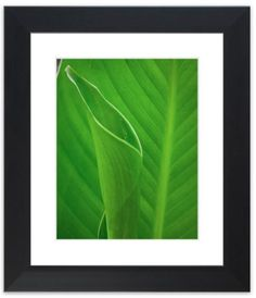 "11"" x 14"" Traditional Photography Prints / Wall Décor Nature Photograph: Leaves Canna Lily Plant. View all of the stunning Nature Photos by Landscape and Nature Photographer Melissa Fague at:  https://www.etsy.com/shop/PIPAFineart Limited edition fine art nature photography prints and canvas wraps are also available in a variety of sizes."