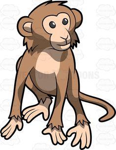 #animal #Animalia #Aotidae #arms #Atelidae #Callitrichidae #campuchin #Cebidae #Cercopithecidae #Chordata #forest #hair #hairy #haplorhine #Haplorhini #happiness #happy #jungle #legs #longtail #look #looking #mammal #Mammalia #monkey #monkeykingdom #observe #observing #paraphyleticgroup #Pitheciidae #primate #primates #rainforest #smile #smiling #tail #timberland #woodland #zoo #vector #clipart #s