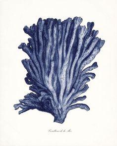 Coastal Decor  Vintage Pacific Sea Coral di vintagebytheshore