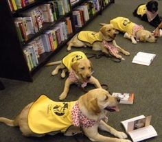 Happy service dogs reading!