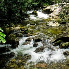Colour Through Mossman Gorge. A collection of fine art photography images from Far North Queensland's Wet Tropics and Daintree. A UNESCO World Heritage Listed site. Add a splash of the TROPICS and SOOTHING WATER. Visit my photo gallery and get a beautiful Fine Art Print, Canvas Print, Metal or Acrylic Print OR Home Decor products. 30 days money back guarantee on every purchase so don't hesitate to add some WILD TROPICS in your home.