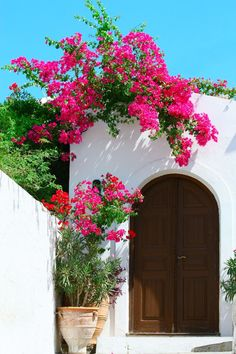 A wooden door framed by overhanging Bougainvillea on the Isle of Rhodes, Greece.