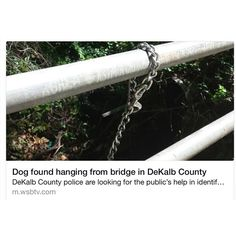 """""""HERE IS AN UPDATE on the 1 year old Pibble hung from a bridge on May 20th in Dekalb County Georgia.  Fellow Pibble marchers Stubby's Heroes rescue out of GA immediately took action and continue to take action by heading up man hunt for who did this.  They have raised reward money and are doing all they can to seek justice and they need our help.  We CANNOT LET THIS GO AWAY!!! Please keep sharing!! Justice for this dog depends on us and the message must be sent to abusers that members of the…"""