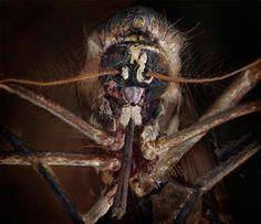 Les terrifiants Insectes domestiques (7)