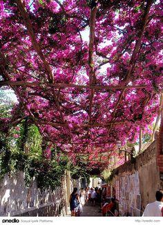 Positano, İtalya