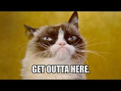 Happy Birthday Grumpy Cat! - YouTube