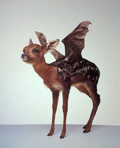 Thomas Grunfeld.  Misfit, 1996 deer with bat wings #taxidermy