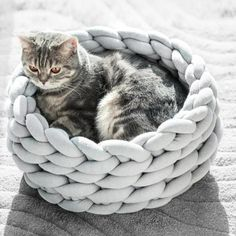 Warm Dog House, Puppy House, Gato Crochet, Mini Puppies, Diy Dog Bed, Knitted Cat, Photo Chat, Cat Dog, Pet Furniture