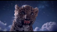 ~Christmas myth reinvented for Cartier. Production : Wanda Postproduction : Cube Creative~