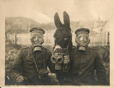 "German soldiers and their mule (circa 1916/17)  wearing M1915 Gummimask (gas masks) with size ""2"" (medium) and a mule wearing a M15 Gummimask. In 1918 special gas masks for mules and horses were issued. This particular photo could either be a joke or it could be serious since gas shells exploded in rear areas where German Army draft animal were kept."