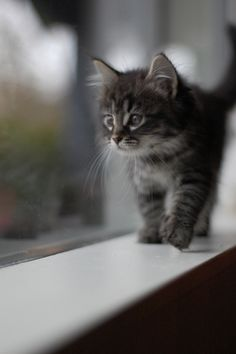 kitten on windowsill