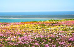 namaqualand - Google Search