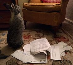 Bunny looks for more mail to destroy - September 14, 2016