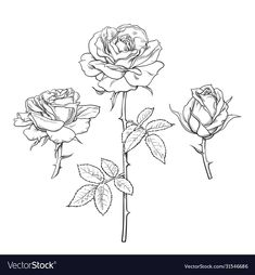 Rose Stem Tattoo, Flower Cover Up Tattoos, Rose Drawing Tattoo, Realistic Rose Tattoo, Rose Flower Tattoos, 4 Tattoo, Body Art Tattoos, Rose With Stem Drawing, Maine Tattoo