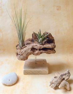 Objet en bois flotté et ses deux Tillandsias par l'Atelier de Corinne : Accessoires de maison par atelier-de-corinne