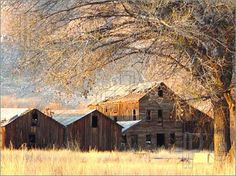 collection of old barns