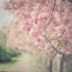 a spring walk | Flickr - Photo Sharing!