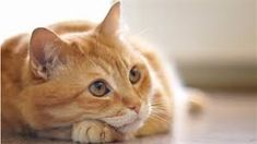Image result for cat pictures