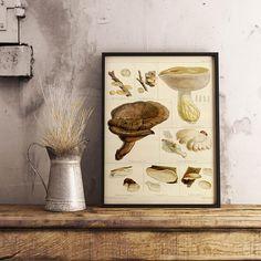 Mushroom Diagram Poster Fungi Chart Print Affiche
