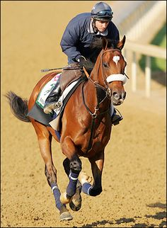 In memory of Barbaro, who gave us his all. A brave horse if there ever was one. We miss and love you.