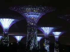 Supertrees at Gardens by the Bay, Singapore Gardens By The Bay, Wings, Album, Singapore, Travel Tips, Travel, Feathers, Card Book