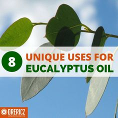Eucalyptus essential oil are truly a gift from God. Find out how what the research shares about best medicinal and home uses. Eucalyptus Essential Oil Uses, Essential Oil Diffuser, Essential Oil Blends, Aromatherapy Recipes, Daily Health Tips, Plant Therapy, Abundant Life, Doterra Oils, Young Living Essential Oils