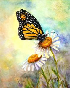 Flowers Drawings Inspiration : The monarch butterfly (Danaus plexippus) is a milkweed butterfly (subfamily Dana The Joy Of Painting, Simple Oil Painting, Acrylic Painting Tips, Butterfly Painting Easy, Butterfly Drawing, Butterfly Watercolor, Watercolor Art, Plant Drawing, Painting & Drawing