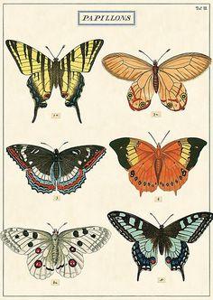 Cavallini & Co poster papillons 50 x 70 cm