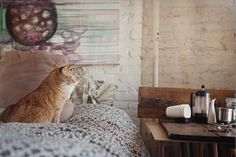 kitty & coffee, what could be better?