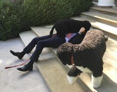 'President Obama' Lies Down On The White House Steps To Wrestle With His Dogs