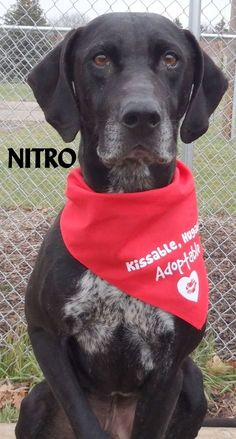 ADOPTED!  Tag# 12919 Name is Nitro Coonhound mix Male-not neutered 8-9 years old Sweet and friendly boy, very smart! Located at 2396 W Genesee Street, Lapeer, Mi. For more information please call 810-667-0236. Adoption hrs M-F 9:30-12:00 & 12:30-4:15, Weds 9:30-12:00 & Sat 9:00-2:00  https://www.facebook.com/267166810020812/photos/a.949811608422992.1073742222.267166810020812/949813071756179/?type=3&theater