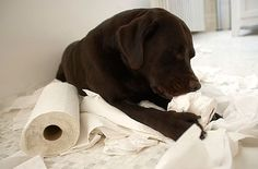 Dog Behavior Problems - Questions About Dog Behaviors - Good Housekeeping