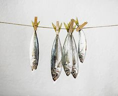 Questions | Fishy still life | James Hughes (lost parables) | Flickr