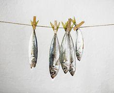 Questions | Fishy still life | James Hughes (lost parables) | Flickr