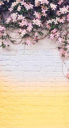 Fundos Tumblr Wallpaper, Wallpaper Free, Colorful Wallpaper, Screen Wallpaper, Black Wallpaper, Mobile Wallpaper, Backgrounds White, Cute Wallpaper Backgrounds, Flower Backgrounds