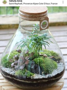 Plants in glas bowls You are in the right place about Miniature Garden shed Here we offer you the most beautiful pictures about the Miniature Garden shed you are looking for. Terrarium Jar, Terrarium Plants, Succulent Terrarium, Plants In Jars, Terrarium Ideas, Ideas Florero, Paludarium, Vivarium, Water Garden